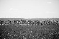 peloton<br /> <br /> 2014 Belgium Tour<br /> stage 4: Lacs de l'Eau d'Heure - Lacs de l'Eau d'Heure (178km)