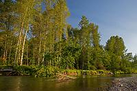 Nisqually River, WA.  July.