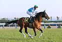 Horse Racing : 2019 Andromeda Stakes