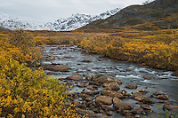 Fall colors ignite the slopes along the Peters Creek drainage on the Willow side of Hatcher Pass as termination dust makes its way down the Talkeetna mountains.The road over the pass is closed to vehicle traffic for winter starting Sept. 14 this year.