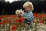 Europe, DEU, Germany, Northrhine Westphalia, Lower Rhine, Voerde, Young boy in a field with flowering poppies are picking flowers, Papaver rhoeas....[ For each utilisation of my images my General Terms and Conditions are mandatory. Usage only against use message and proof. Download of my General Terms and Conditions under http://www.image-box.com or ask for sending. A clearance before usage is necessary...Material is subject to royalties. Each utilisation of my images is subject to a fee in accordance to the present valid MFM-List...Contact | archive@image-box.com | www.image-box.com ]