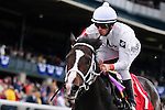 31 October 2009: Jockey Leandro Goncalves guides Lost Camper home for a win in Keeneland's second race on the card.