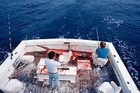 sport fishermen with a captured scalloped hammerhead shark, Sphyrna lewini, Florida, Atlantic Ocean