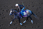 November 3, 2020: Crazy Beautiful, trained by trainer Kenneth G. McPeek, exercises in preparation for the Breeders' Cup Juvenile Fillies at Keeneland Racetrack in Lexington, Kentucky on November 3, 2020. John Voorhees/Eclipse Sportswire/Breeders Cup/CSM