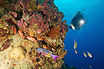 Diver and schooling Blackbar Soldierfish