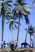 Marenco, Osa Peninsula, Costa Rica. Tourists with horses with a guide on the beach under some palm trees.