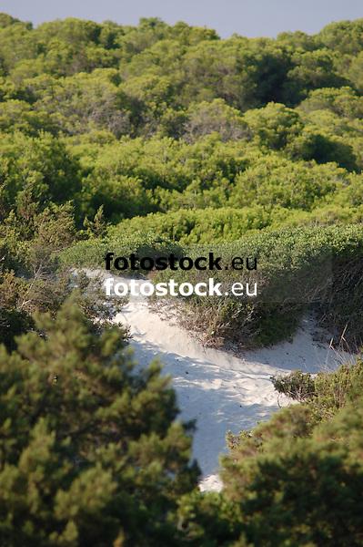 Dunes of Es Trenc<br /> <br /> Dunas de Es Trenc<br /> <br /> Dünen von Es Trenc<br /> <br /> 3008 x 2000 px<br /> 150 dpi: 50,94 x 33,87 cm<br /> 300 dpi: 25,47 x 16,93 cm