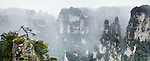Tree on a cliff of a mountain peaks in fog. Panorama at Zhangjiajie National Forest Park, Zhangjiajie, Hunan, China Image © MaximImages, License at https://www.maximimages.com