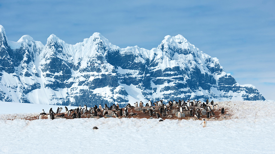 A colony of gentoo penguin sits beneath a mountain at Demoy Point in the Antarctic peninsula.