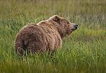 NEW! Bears in Alaska!