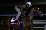 October 30, 2020: Nashville, trained by trainer Steven M. Asmussen, exercises in preparation for the Breeders' Cup Sprint at Keeneland Racetrack in Lexington, Kentucky on October 30, 2020. Alex Evers/Eclipse Sportswire/Breeders Cup