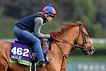 ARCADIA, CA - NOV 01: Ring Weekend, owned by St. Elias Stable & West Point Thoroughbreds, Inc. and trained by H. Graham Motion, exercises in preparation for the Breeders' Cup Mile at Santa Anita Park on November 1, 2016 in Arcadia, California. (Photo by Scott Serio/Eclipse Sportswire/Breeders Cup)
