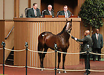 September 11, 2014: Hip #680 War Front - Gold Vault colt consigned by Claiborne Farm, sold for $2,200,000 to Shadwell Farm at the Keeneland September Yearling Sale.   Candice Chavez/ESW/CSM