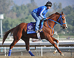 Brown Almighty, trained by Tim Ice, exercises in preparation for the upcoming Breeders Cup at Santa Anita Park on October 31, 2012.