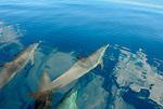 Sea Life- Mammal