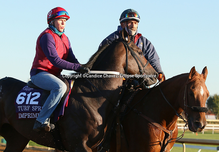 Imprimis, trained by trainer Joseph F. Orseno, exercises in preparation for the Breeders' Cup Turf Sprint at Keeneland Racetrack in Lexington, Kentucky on November 4, 2020.