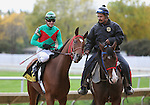 10 October 2009: PROCEED BEE with jockey Chris Emigh warms up in to post parade for the 45th running of the G3 Hawthorne Derby at Hawthorne Race Course in Cicero/Stickney, Illinois.