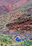 Arizona, Grand Canyon, Grand Canyon National Park, Hermit Trail, Hermit Creek campsite, campers, Hermit to Bright Angel Loop, Southwest America, U.S.A.,