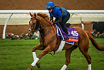 DEL MAR, CA - OCTOBER 31:  Wuheida, owned by Godolphin Stable Lessee and trained by Charlie Appleby, exercises in preparation for Breeders' Cup Filly & Mare Turf gallops at Del Mar Thoroughbred Club on October 31, 2017 in Del Mar, California. (Photo by Alex Evers/Eclipse Sportswire/Breeders Cup)