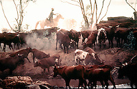 Aboriginal Stockman - Cattle muster Outback Australia