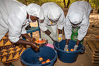 Washing Cashew Apples in Preparation for Slicing , The Gambia