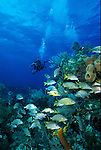 Underwater scene of scuba diver in the Out Islands of the Bahamas