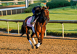 April 26, 2021: Millefeuille exercises in preparation for the Kentucky Oaks at Churchill Downs on April 26, 2021 in Louisville, Kentucky. Scott Serio/Eclipse Sportswire/CSM