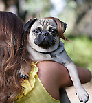 """No Repro Fee.<br /> Model Holly Carpenter and Ted the Pug pictured here at the launch of the """"Pawsitive Living"""", Pedigree's new information campaign aimed at encouraging dog owners to take a more active role in their dog's Health and Wellness. To Motivate consumers to participate, Pedigree will be offering 1000's of prizes both inshore and through the Pedigree Ireland Facebook page. Pic. Robbie Reynolds"""