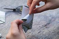 Samentütchen basteln, Anleitung zum Basteln, Knicken, Falten von Samentütchen, Umschlag, Umschläge, aus Geschenkpapier, Bastelei, Wildsamen in selbstgebastelten Tütchen zum Verschenken, Wildkräutersamen, Wildkräuter-Samen, Samen von Wildkräutern, Samen von Wildpflanzen im Herbst sammeln, seed
