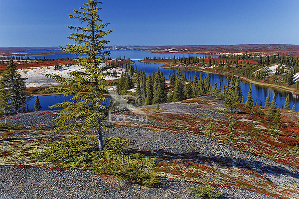 Sub-arctic sand esker and lakes at black spruce treelline on the tundra, late summer, Thelon barrenlands, Northwest Territories, Canada.