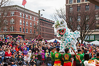 Lion Dance, Chinese Lunar New Year, Chinatown, Seattle, WA, USA.