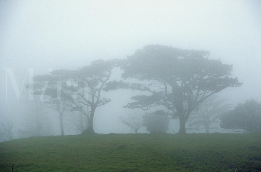 Trees in fog. Alaljuela, Costa Rica Central Valley.