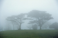 Trees in fog. Alaljuela, Costa Rica Central Valley.