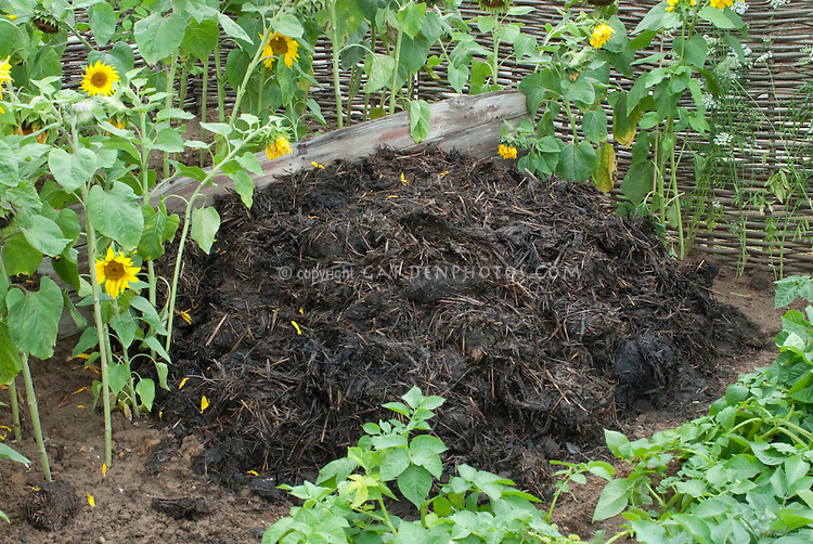 Composted Manure pile + vegetables and sunflowers. Organic fertilizer for the garden.