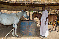 Senegalese Farmer and his Horses.  Bijam, a Wolof Village, near Kaolack, Senegal. DOZENS MORE OF IMAGES RELATED TO MILLET CULTIVATION ARE AVAILABLE.  WHAT DO YOU NEED?