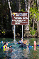 Curious snorkelers pass by newly mounted signs informing all of the proper way of interacting with the endangered Florida Manatee at theThree Sisters Sanctuary. Crystal River,Florida. ( no MR)