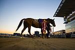 SHINAGAWA,JAPAN-DECEMBER 29: Copano Rickey,ridden by Hironobu Tanabe, after winning the Tokyo Daishoten at Ohi Racecourse on December 19,2017 in Shinagawa,Tokyo,Japan (Photo by Kaz Ishida/Eclipse Sportswire/Getty Images)