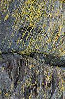 Rock Face with Lichens, Holbrook Island Sanctuary, Brooksville, Maine, US