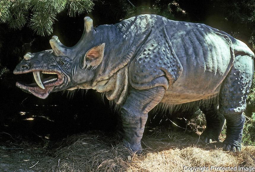 "Pre-historic Animals:  ""Sabertooth Rhino"" Eobasileus, late Eocene. 22 million years ago. A ""dawnbeast""--extinct order of mammals. No physiological similarity to rhinos."