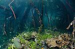 Sunrays filtering through the mangroves, Yangeffo, Gam Island, Waigeo, Raja Ampat, Indonesia, Pacific Ocean
