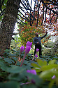 27/10/16<br /> <br /> You'd be forgiven for thinking that after more than 50 years running a garden nursery, 67-year-old John Massey would be enjoying the peace and tranquillity of retirement.<br /> <br /> But not a bit of it, if anything this keen plantsman is now busier than ever, caring for his own three-acre garden, a beautiful 'all seasons' oasis set in the heart of industrial Birmingham.<br /> <br /> Full story: https://fstoppressblog.wordpress.com/birmingham-garden-in-stunning-autumn-colour/<br /> <br /> With its informal borders, island beds, woodland dells and wildlife meadow, the garden is a riot of colour still, despite the colder evenings and fading daylight hours, showing off an abundance of rare plants as well as many familiar favourites including cyclamen and colchicums, malus trees laden with crab apples and the fiery hues of liquidambar, euonymus and Japanese acers.<br /> <br /> MORE…<br /> <br /> All Rights Reserved: F Stop Press Ltd. +44(0)1773 550665 www.fstoppress.com
