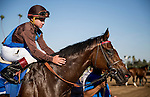 September 26 2015: Photo Call with Drayden Van Dyke up wins the Rodeo Drive Stakes at Santa Anita Park, Arcadia CA. Alex Evers/ESW/CSM