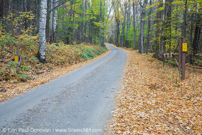 Leaf drop along Long Pond Road (old North and South Road) in Benton, New Hampshire USA during the autumn season. This is a seasonal road gated during the winter months.