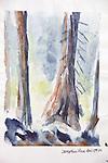 Fir trees, Deception Pass, Journal Art 2004