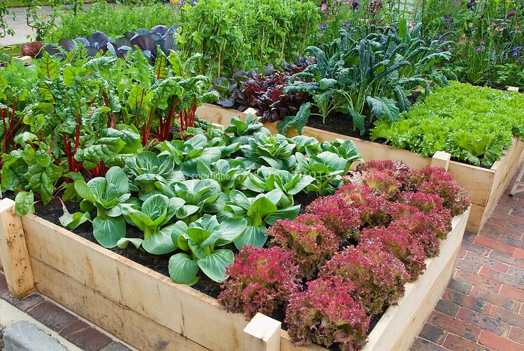 Raised Bed Vegetable Garden in Backyard, square foot type gardening aka Cavalo Nero kale