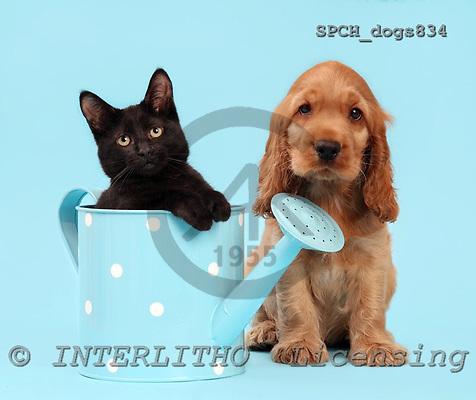 Xavier, ANIMALS, dogs, photos, SPCHDOGS834,#A# Hunde, perros