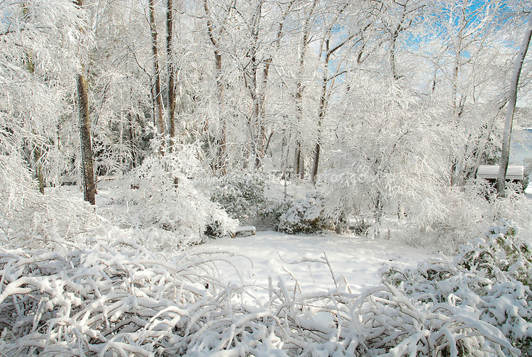 Winter snow on trees in backyard garden with blue sky on sunny December day, shrubs, bench, lawn