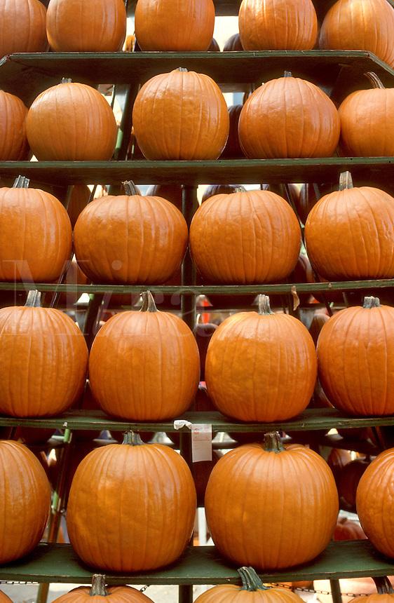 Circleville Pumpkin Festival, central Ohio, USA