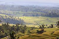 Jatiluwih, Bali, Indonesia.  Terraced Rice Fields, Early Morning.