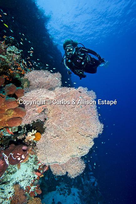 Coral reef, Kurkap Seamount, Indonesia